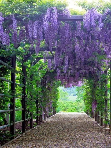 best climbing plants for arches types of plants for arches and pergolas another plant i