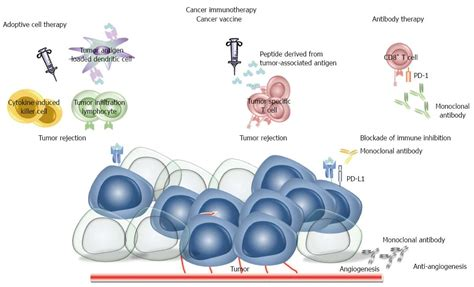 cell based immunotherapy for cancer immunotherapy in gastric cancer