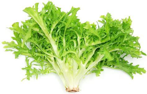 Endives Benefits For Detoxing by Endive Nutrition Endive Endivenutrition Cooking And