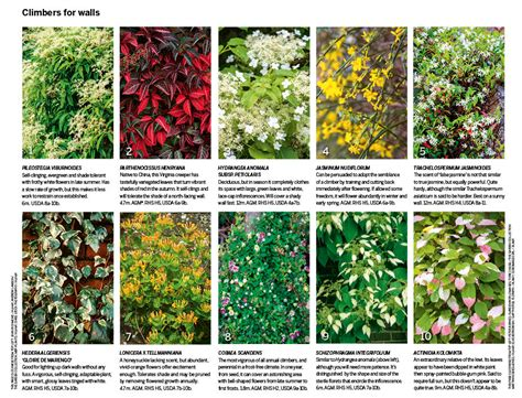 climbing plants for walls 30 of the best climbing plants gardens illustrated