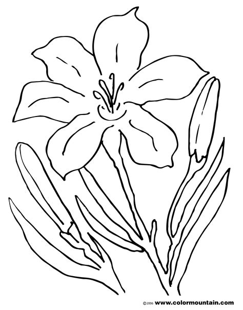coloring pictures of easter lilies easter coloring page www pixshark images