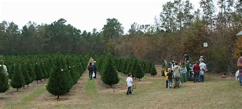 grant christmas tree farm