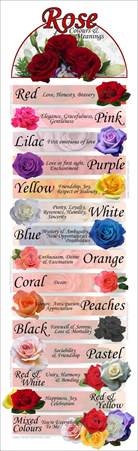 meaning of different color roses colours meanings 24 hrs city florist singapore