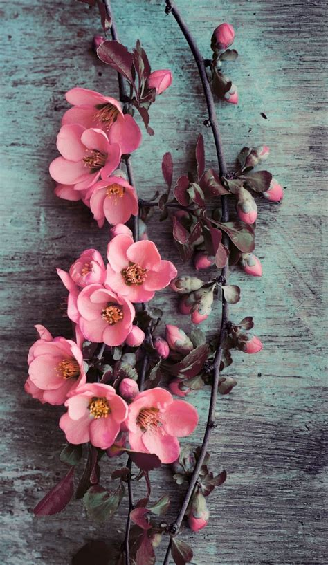 wallpaper for iphone flowers wallpaper iphone beauty pink flowers wallpapers iphone