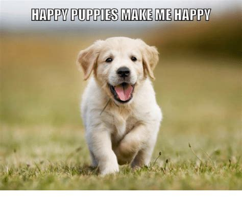 puppies make me happy 25 best memes about happy puppies happy puppies memes