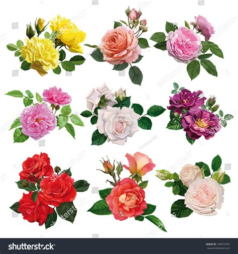 Set Flower set flowers multicolored roses leaves stock vector