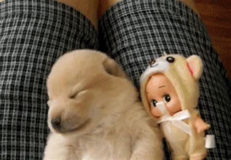 puppy gif 21 gifs of snoozy pups that ll give you a serious of