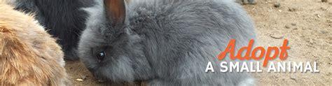 adopt a small adopt a small animal animal protective foundation