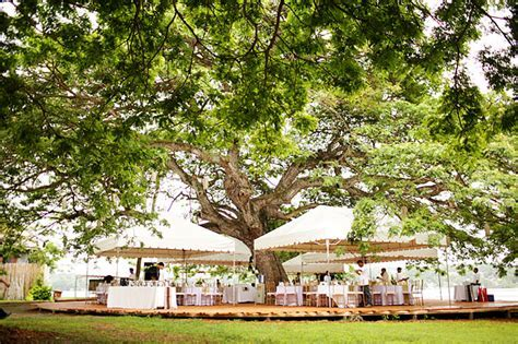 marry under a big tree in Dauis, Bohol, Philippines
