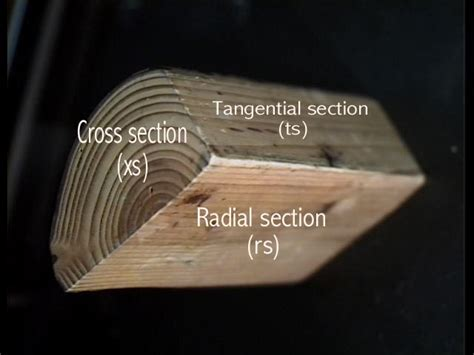 tangential section stems the ohio state university at lima