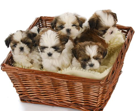 basket of puppies 15 great uses for wicker baskets