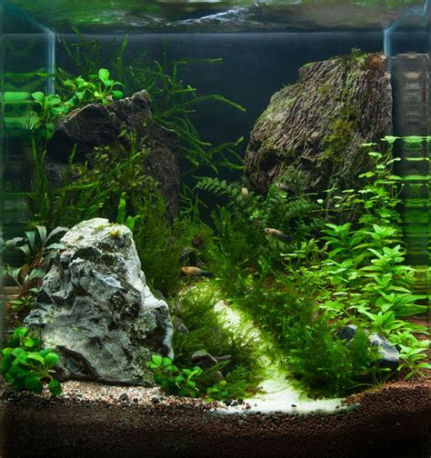 Planted Aquarium Aquascaping by 17 Best Images About Planted Nano Tanks On