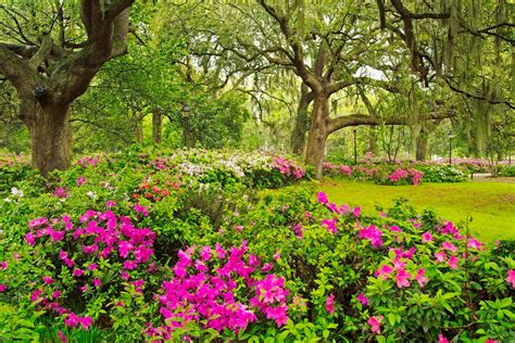 beautiful flower garden beautiful flower garden flower forest cool wallpapers