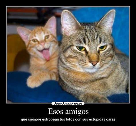 imagenes de amor chistosas con animales animales frases graciosas imagui