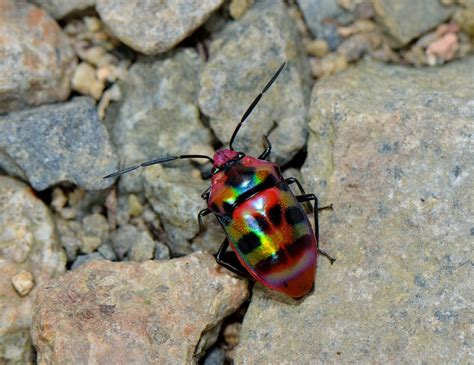 amazing insects creepy crawlies