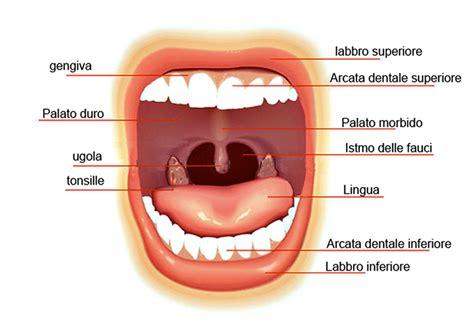 interno bocca la bocca superagatoide