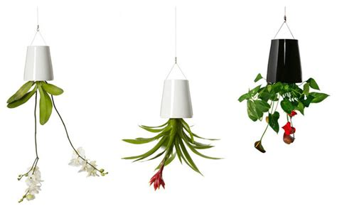 in door plants pot three four plants argements the best houseplants and planters for tiny apartments