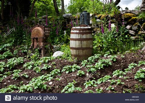 vegetable garden ireland vintage farming vegetable garden with an wine barrel