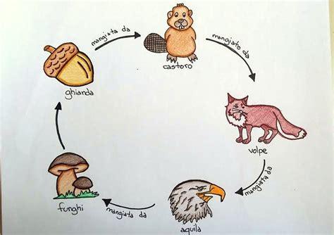 catena alimentare bosco reti alimentari nel bosco