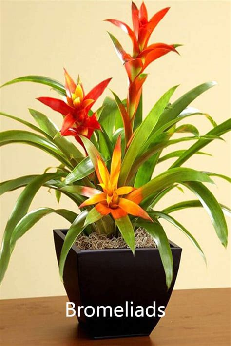 plants that don t need sunlight to grow 100 plants that don t need sunlight to grow 25