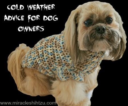shih tzu tips advice cold weather advice for shih tzu