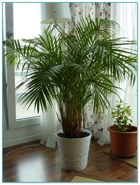Cheap Floor Plants by Large House Plant Pots