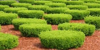 low maintenance shrubs for backyard interior design