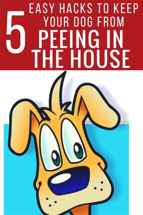 spray to prevent dogs from peeing in the house check out these 5 easy hacks to keep your dog from peeing in the house or on the carpet