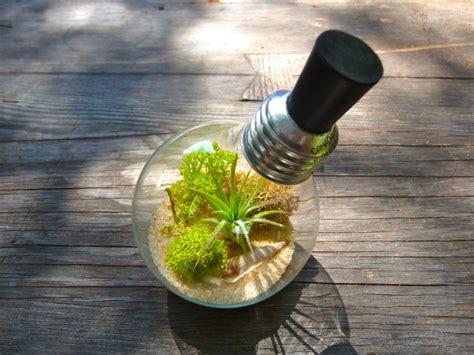 light bulb terrarium diy ideas guide patterns
