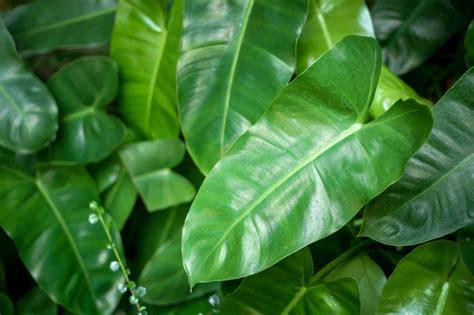 list  house plants common  scientific names