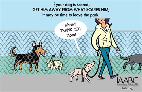how to your to like other dogs canine language green acres kennel shop