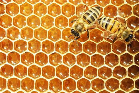 The Essential Guide To Raising Honey Bees Survival Life How To Raise Bees In Your Backyard