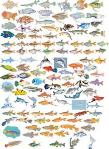 Big Vector Collection of Different Fish   Free Vector Graphics   All