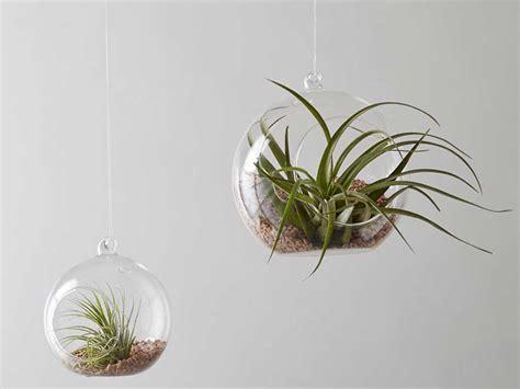 vasi sospesi per piante vasi sospesi piante tutte le immagini per la