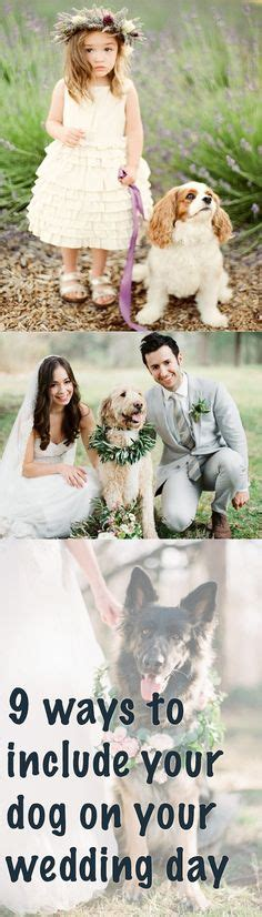 Wedding For Your Beloved Pet by Wedding On Wedding Dress Ring