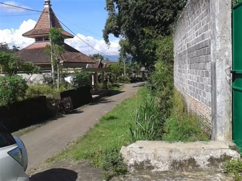 Jual Bibit Ayam Petelur Malang rumah dijual kandang ayam petelur siap isi bangunan permanen