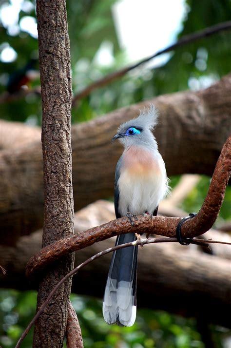 Oscars Liveblog Purple And Blue Baby by Oscar Featherless Bird