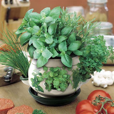 herb pot  sale fast delivery greenfingerscom