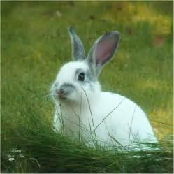 rabbit bunny bunny rabbits images bunny hd wallpaper and background photos 30657068