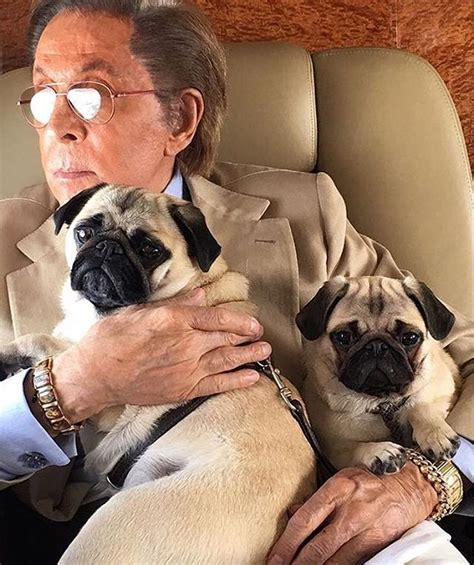 valentino and his pugs valentino pets pet worth