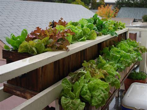 Window Vegetable Garden Top Ten Gardening Mistakes Mistake 7 Incorrect Watering