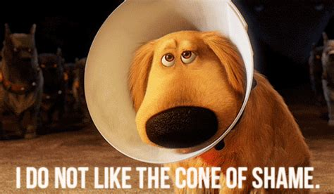 Cone Of Shame Meme - cone of shame gifs find share on giphy