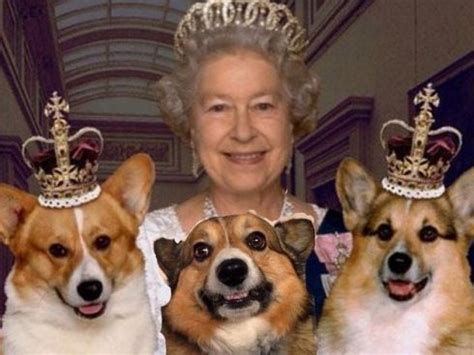 how many corgis does the queen have watercooler dump the queen go dump yourselves chronicle