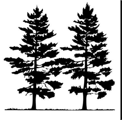 pine tree silhouette tattoo fir tree clipart pine tree outline pencil and in color