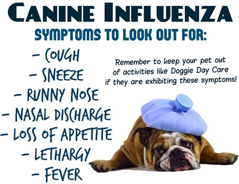 puppy flu nutty news nutty facts nutty jokes nutty new nutty news every day at
