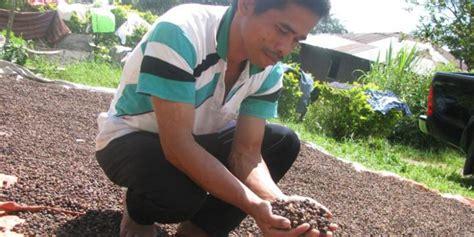 Kopi Arabika Paket Kopi Gift 12 Jenis X 100gr Qs2 budaya manggarai flores kopi indonesia terenak asalnya dari manggarai