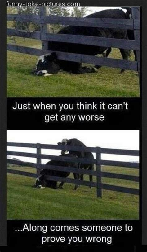 Just When You Thought New On The Block Were by Farm Cow Bad Day Joke Pictures