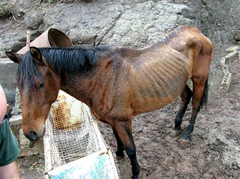 Imagenes De Animales Maltratados | no al maltrato animal taringa