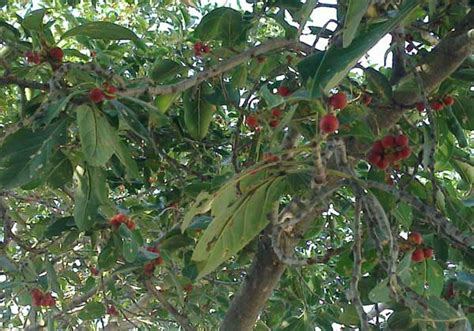 cross pollination fruit trees 10 self pollinating fruit trees home n gardening tips