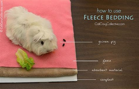 Fleece Blankets For Guinea Pigs by Cali Cavy Collective A About All Things Guinea Pig